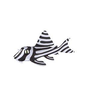 zebra pleco 3d c4d