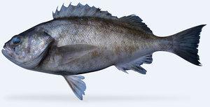 widow rockfish 3d x