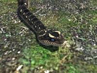 snake reptile