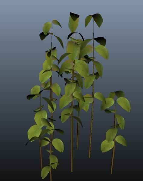 plant ma