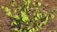 plant shrub 3d ma