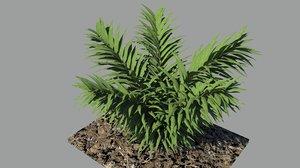 3d model plant shrub