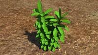 3d herb plant