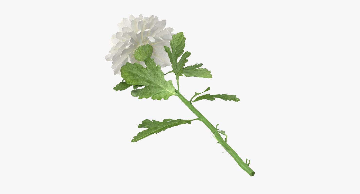 white chrysanthemum laying - 3d max
