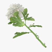 white chrysanthemum laying - 3d max