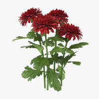 red chrysanthemum natural group 3d c4d