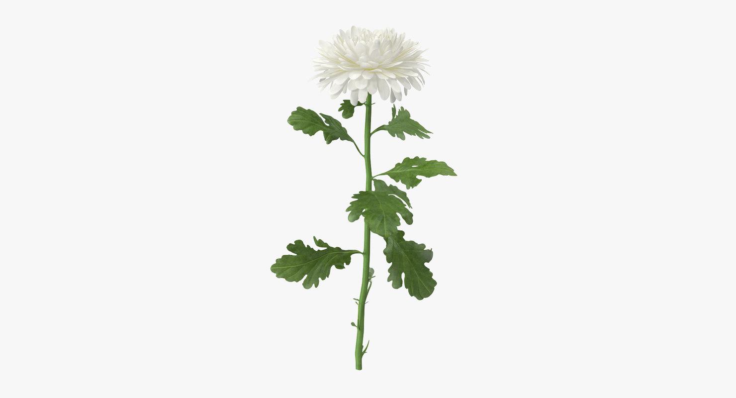 White Chrysanthemum Standing Max