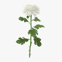 Chrysanthemum White - Single Standing