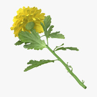 3d model of yellow chrysanthemum laying -