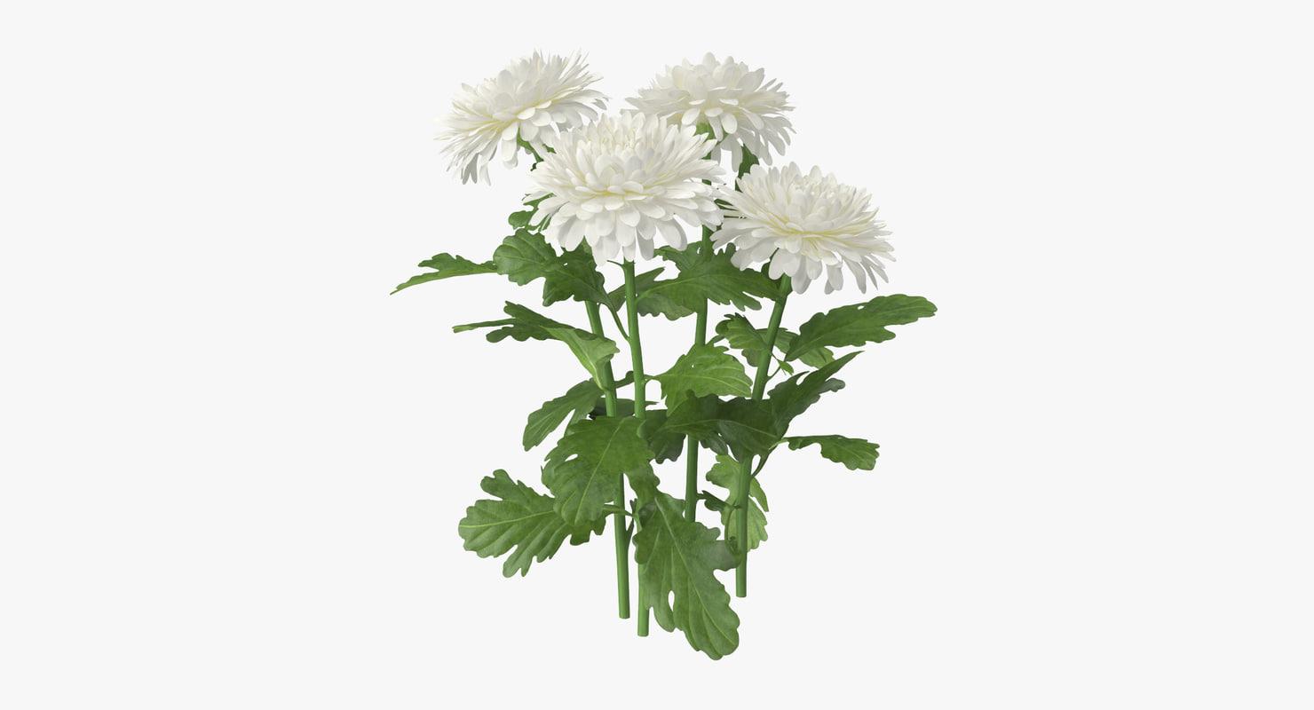 3d white chrysanthemum natural group model