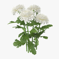 3d white chrysanthemum natural group model