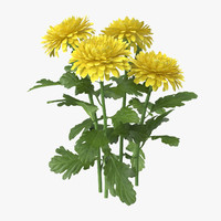 Chrysanthemum Yellow - Natural Group