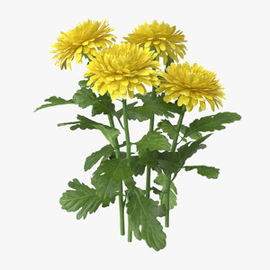 3d model yellow chrysanthemum natural group
