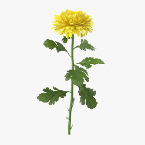 3d max yellow chrysanthemum standing -