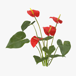 anthurium natural group - x
