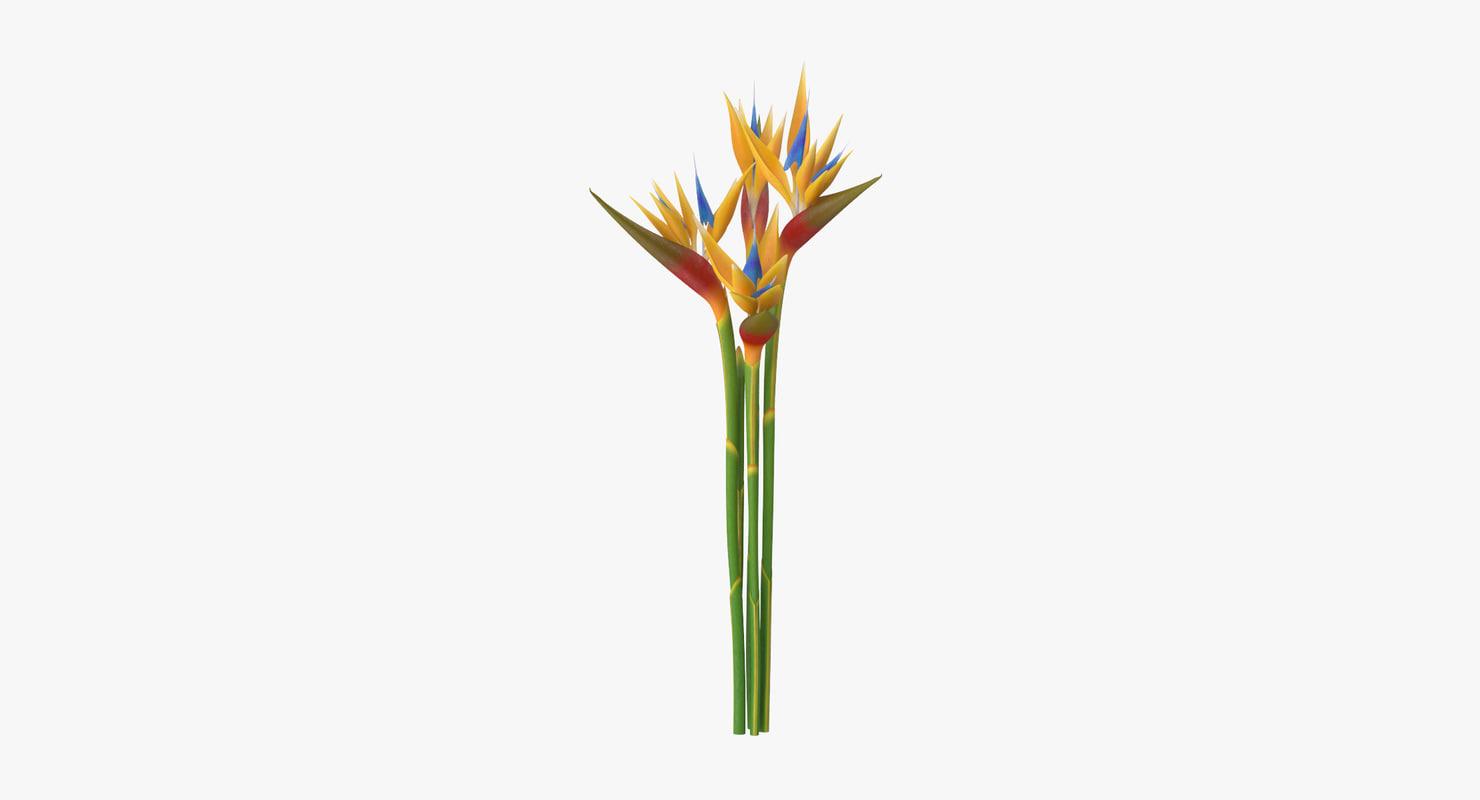 3d model of bird paradise bouquet -