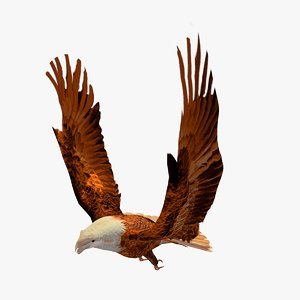 3d flying golden eagle catching model