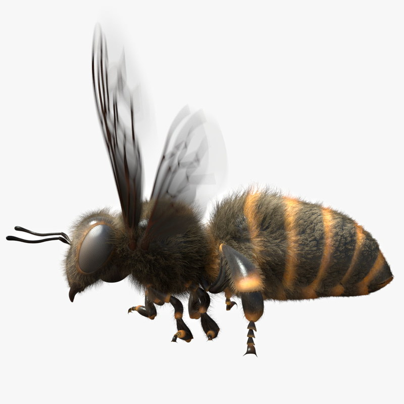 rigged bee 3d obj