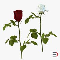 roses set 3d obj