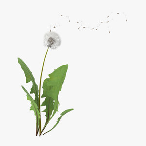 3d model dandelion blown 01