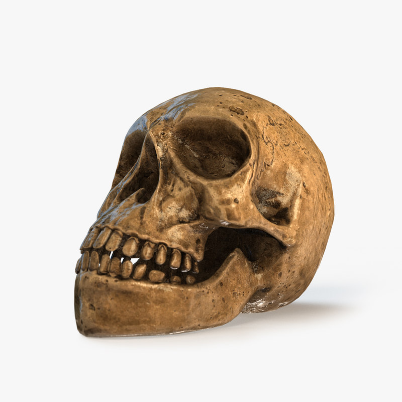 skull pbs realtime 3d model