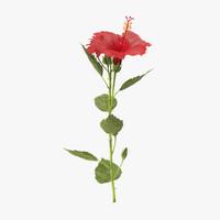 hibiscus standing - 3d c4d
