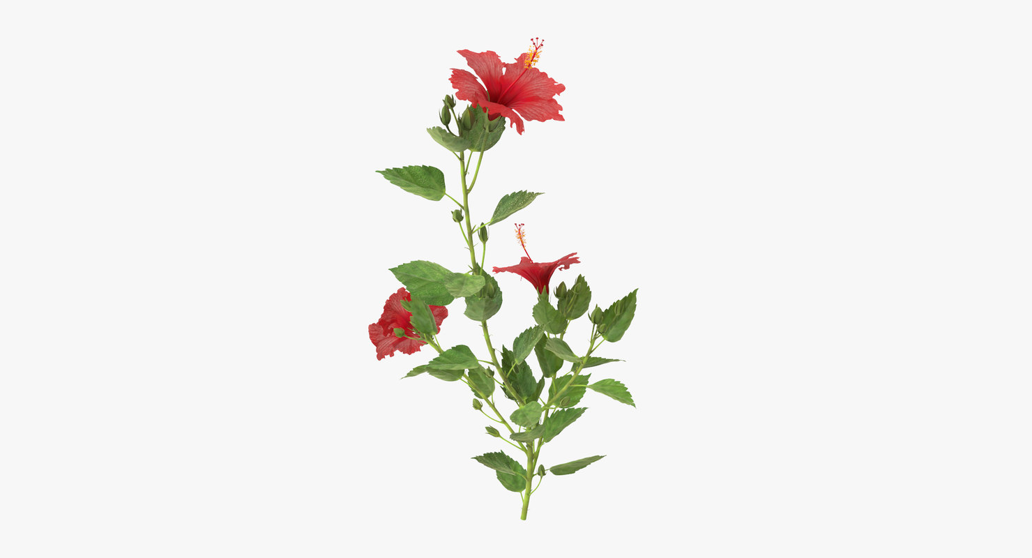 hibiscus natural group - 3d model