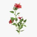 hibiscus 3D models