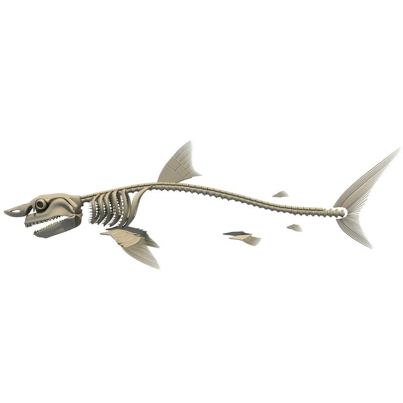 3d great white shark skeleton animal model