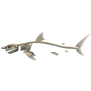 3d great white shark skeleton animal