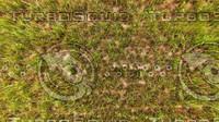 Grass Texture 02