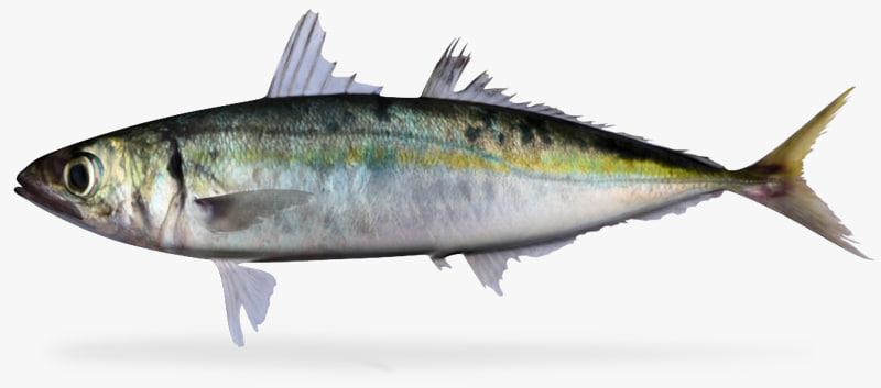 3d mackerel scad