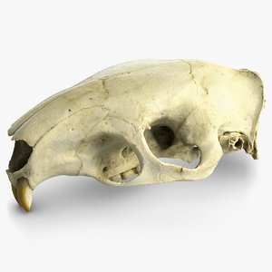 big rat skull raw 3d max