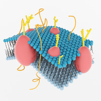 3d max membrane cell