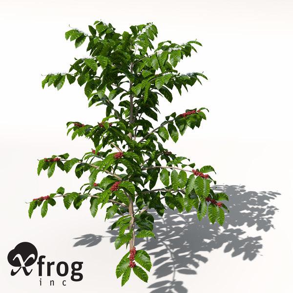 coffee coffea arabica 3d model