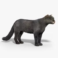 3d jaguarundi cat fur