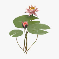 3d model water lily 04