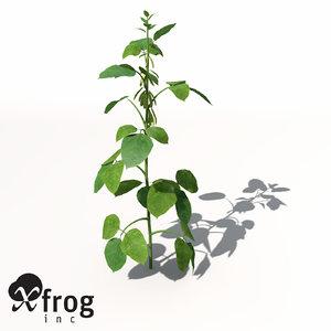 soybean plant 3d model