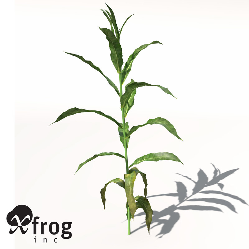 xfrogplants sorghum 3d model