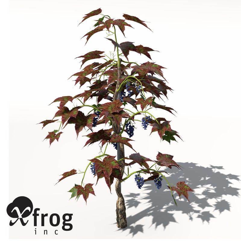 grape vine plant fruit 3d model