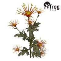 3d xfrogplants florist's chrysanthemum x model