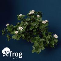 gardenia garden 3d max