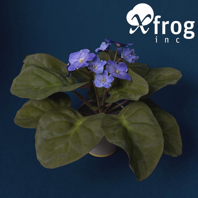 african violet flower plants 3d model