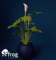 3d model calla lily flowers plant