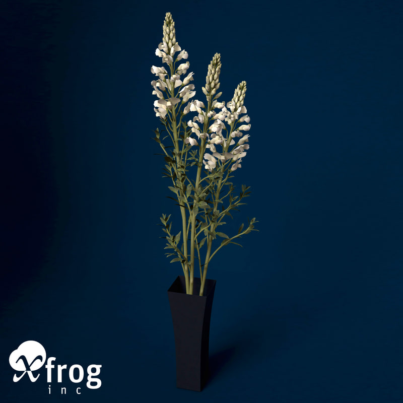 3d model of snapdragon plant flowers