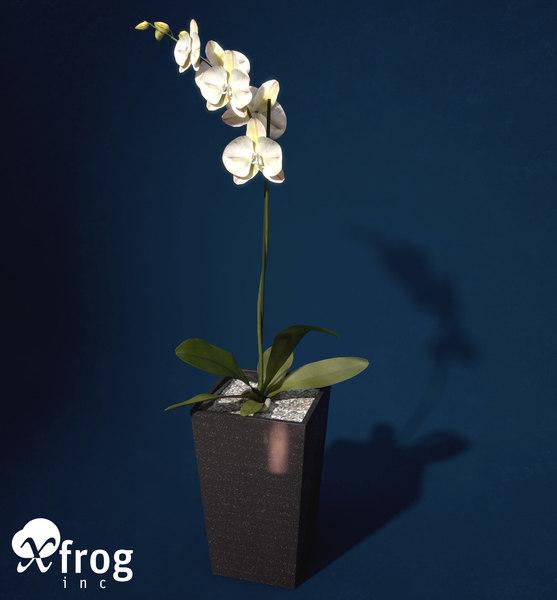 3d x orchid phalaenopsis sp
