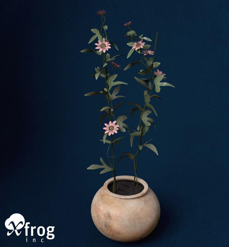 passion flower plants 3d model