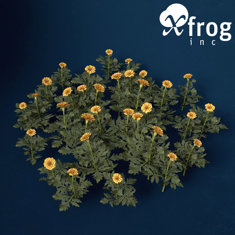3d model marigold flower