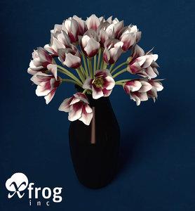 3d tulip planted