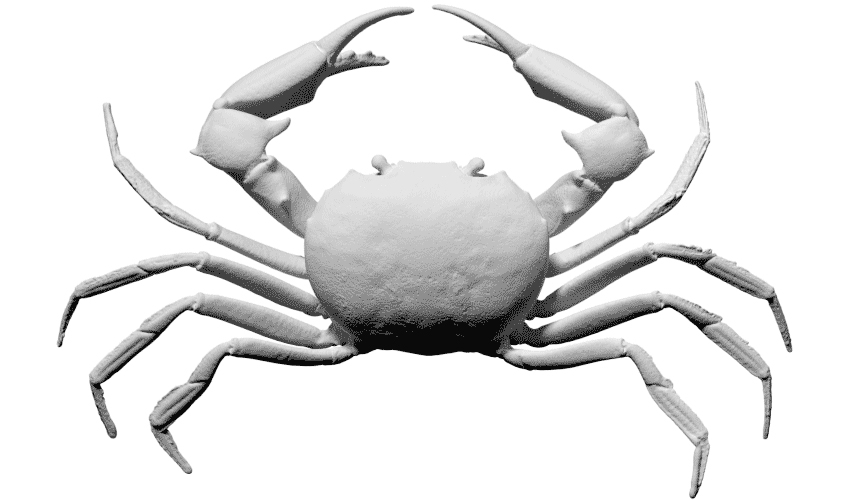 free scan carcinoplax suruguensis crab 3d model